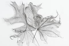 Autumn-Emerging